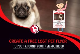 001 Beautiful Lost Dog Flyer Template High Def  Free Pet