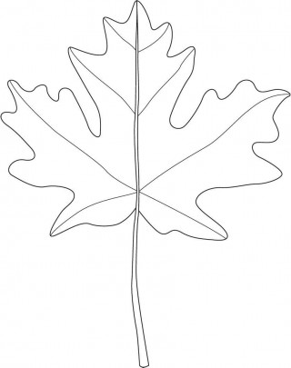 001 Marvelou Blank Leaf Template With Line Photo  Printable320