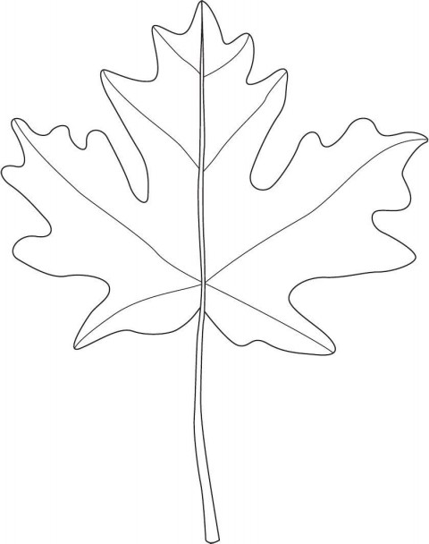 001 Marvelou Blank Leaf Template With Line Photo  Printable480