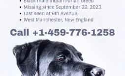 001 Striking Missing Pet Poster Template Design  Uk Word