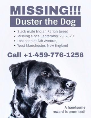001 Striking Missing Pet Poster Template Design  Free Uk320