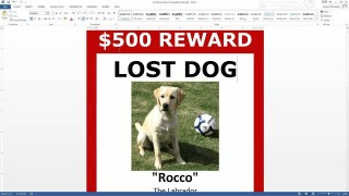 003 Exceptional Missing Dog Flyer Template High Resolution  Lost Poster320