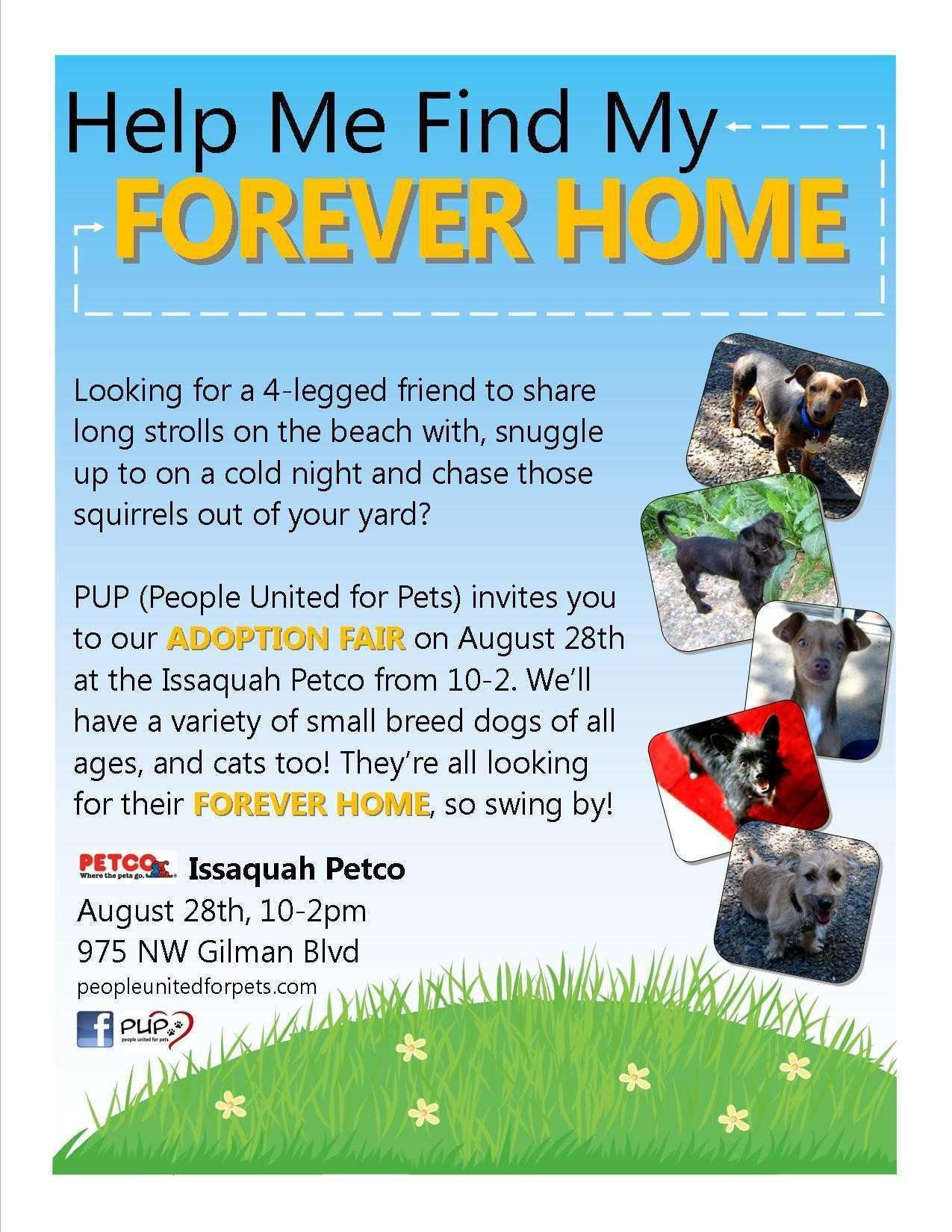 003 Phenomenal Pet Adoption Flyer Template Highest Quality  Free Event DogFull