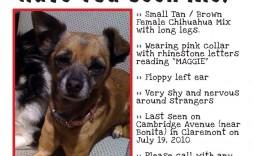 004 Impressive Missing Dog Flyer Template Inspiration  Lost Poster