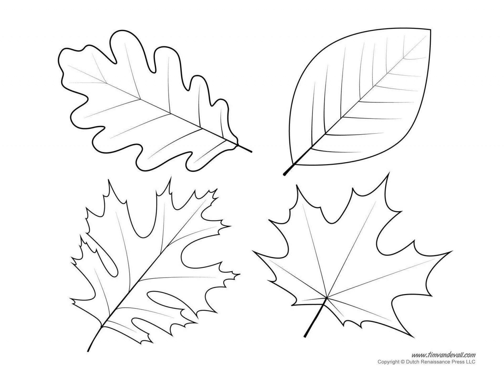 005 Shocking Leaf Template With Line High Definition  Fall Printable Blank1920