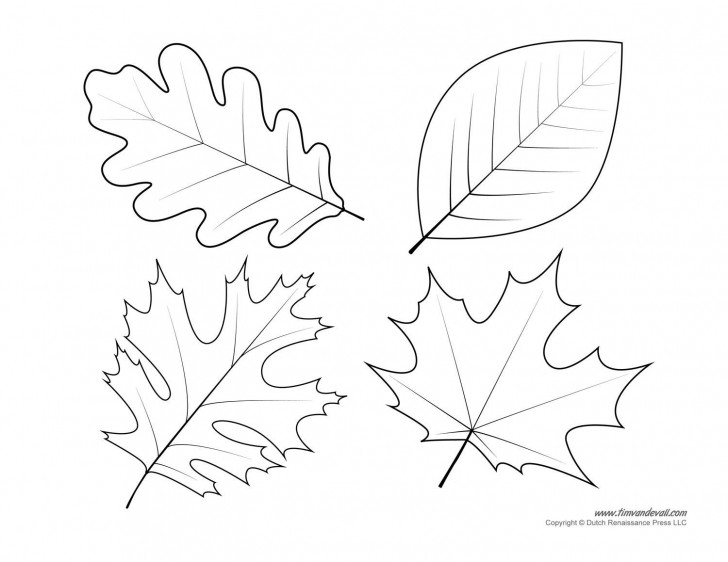 005 Shocking Leaf Template With Line High Definition  Fall Printable Blank728