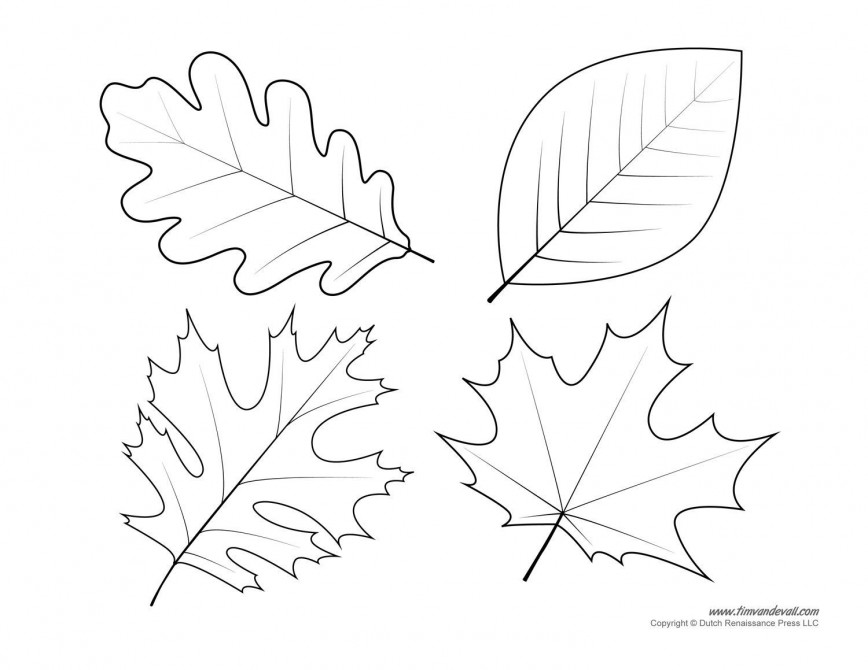 005 Shocking Leaf Template With Line High Definition  Fall Printable Blank868