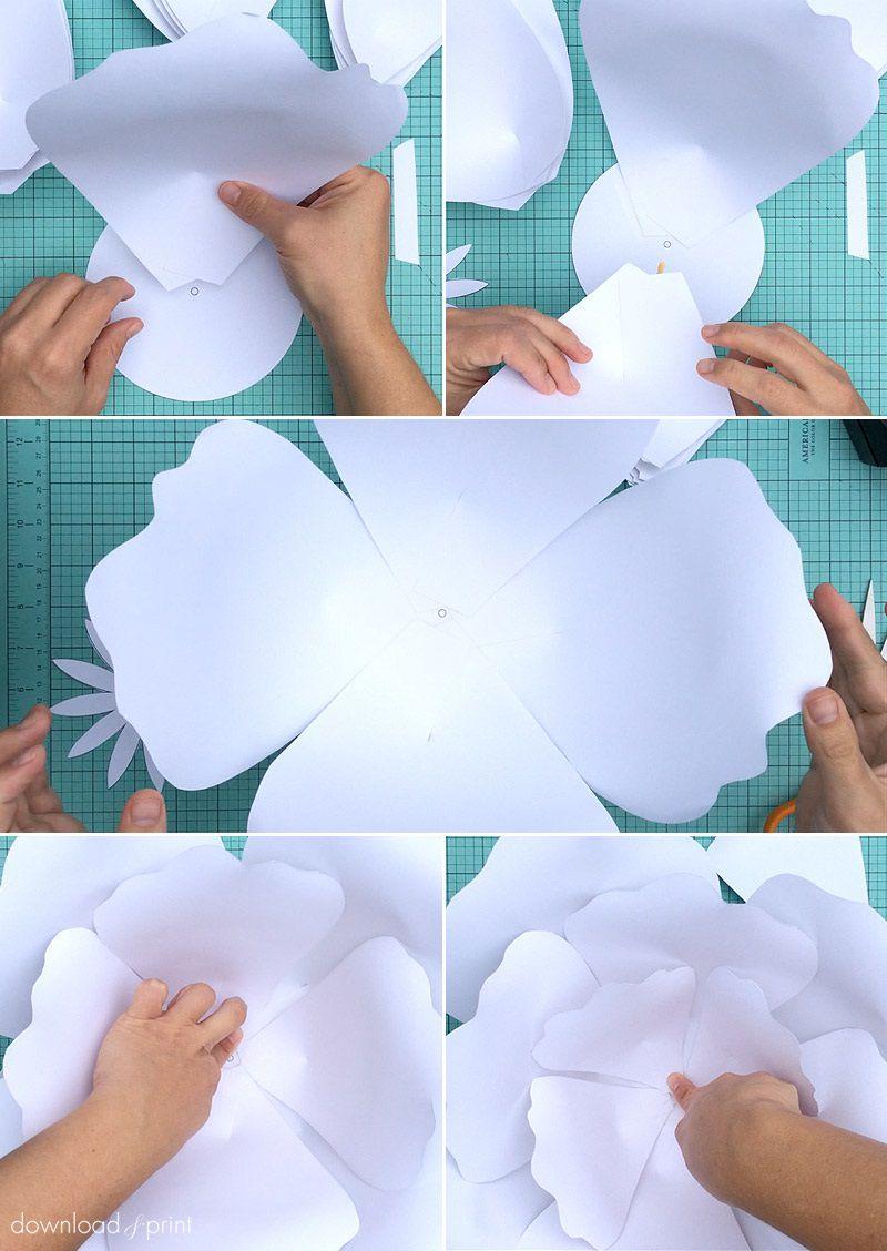 006 Rare Giant Rose Paper Flower Template Free Sample Full