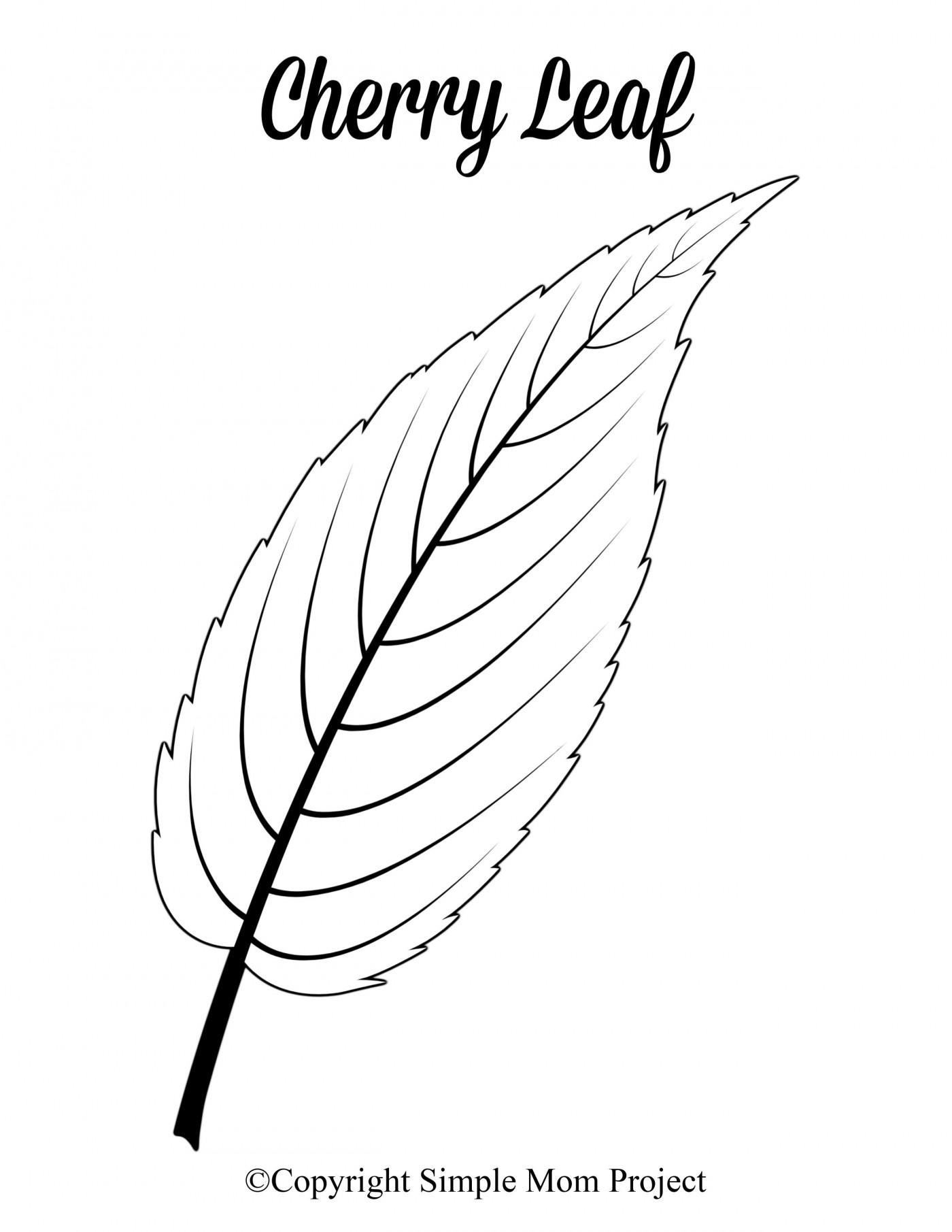 007 Phenomenal Leaf Template With Line Concept  Fall Printable Blank1400