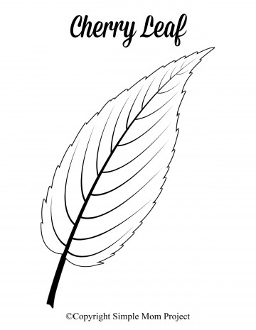 007 Phenomenal Leaf Template With Line Concept  Fall Printable Blank360