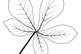 008 Fascinating Leaf Template With Line Picture  Fall Printable Blank