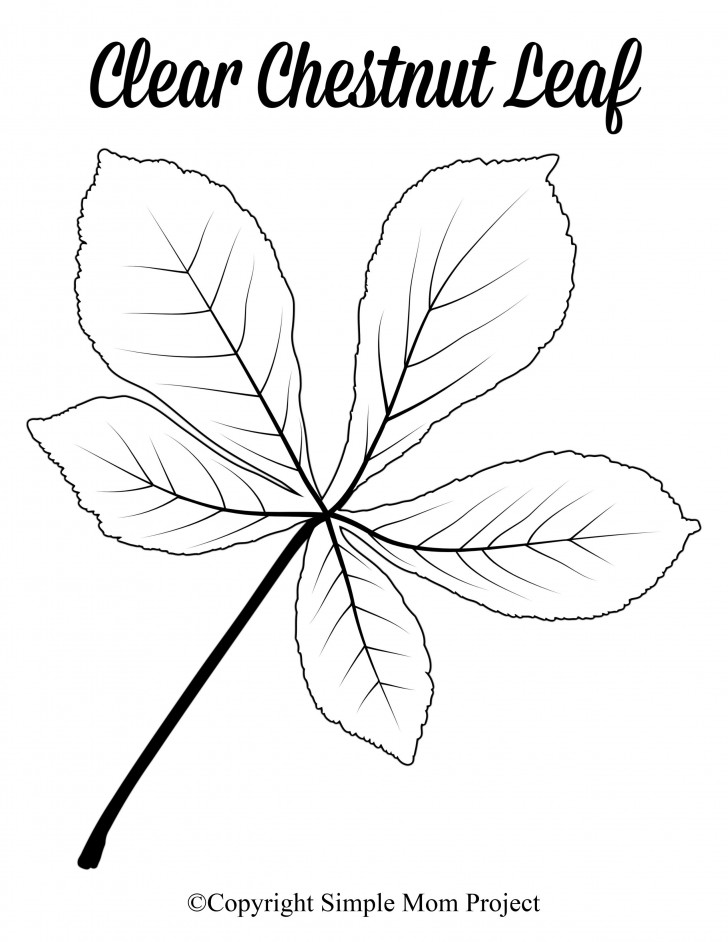 008 Fascinating Leaf Template With Line Picture  Fall Printable Blank728
