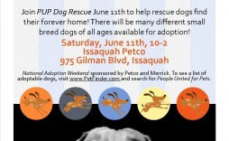 008 Phenomenal Pet Adoption Flyer Template Idea  Free Event Dog