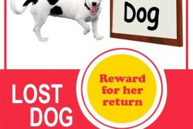 008 Unbelievable Lost Dog Flyer Template Highest Quality  Printable Missing Pet