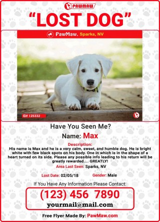 009 Unique Missing Dog Flyer Template Sample  Lost Poster320
