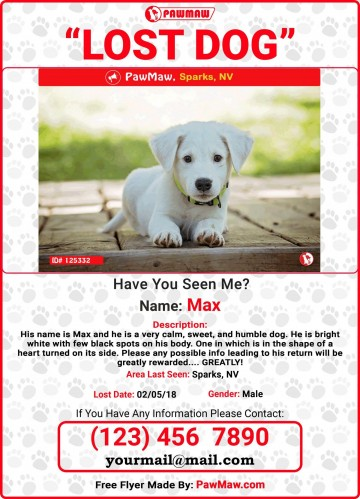 009 Unique Missing Dog Flyer Template Sample  Lost Poster360