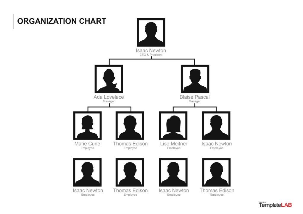 010 Best Microsoft Organizational Chart Template Word Inspiration  Free 2013 HierarchyLarge